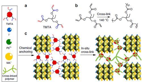 tmta化学结构;(b) tmta加热交联;(c) tmta在钙钛矿薄膜中原位交联示意